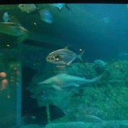 North Carolina Aquariums Pine Knoll Shores Nc