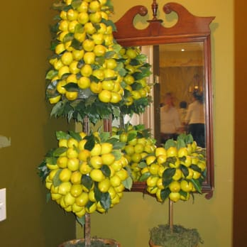 Lemon trees at lemon tree