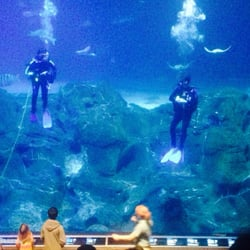 Divers In The Shark Tank