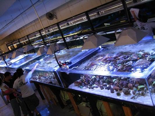 Exotic Aquarium Pet Stores Sacramento Ca Yelp