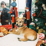 SPCA & Macy's Holiday Windows