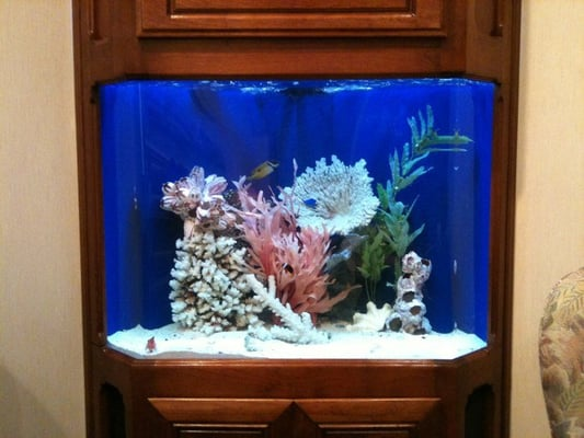 Cool fish tank yelp - Pictures of cool fish tanks ...
