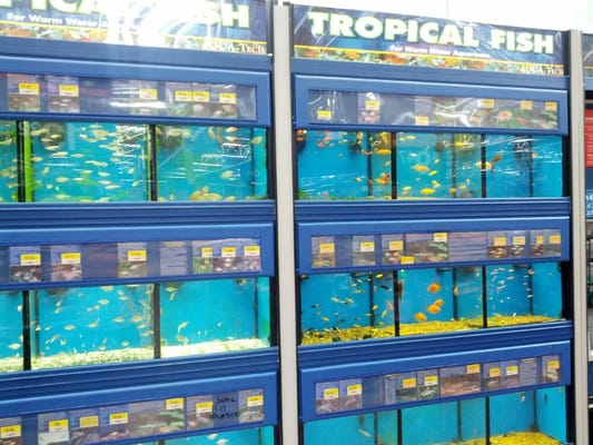 Tropical fish at walmart here is classic tank at wally for Walmart fish supplies