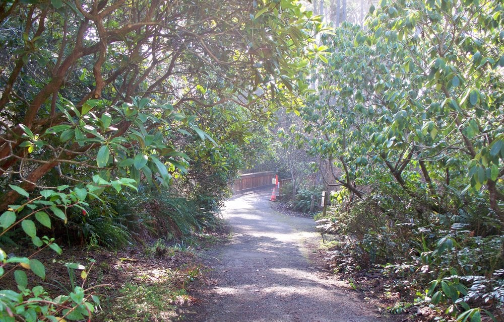 A Bridge Mendocino Coast Botanical Gardens Yelp