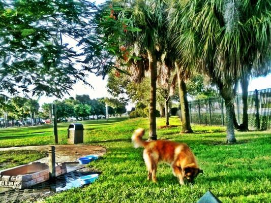 Dog Park Pompano Beach Fl