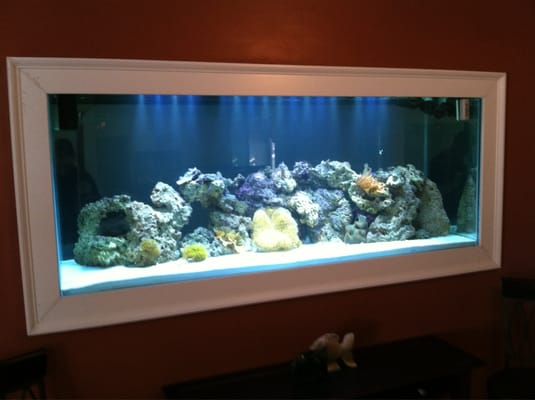 Built in fish tanks related keywords built in fish tanks for Fish tank built into wall