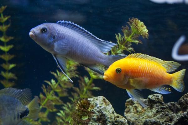 Caesar s tropical fish factory inc pet stores santa for Caesars tropical fish
