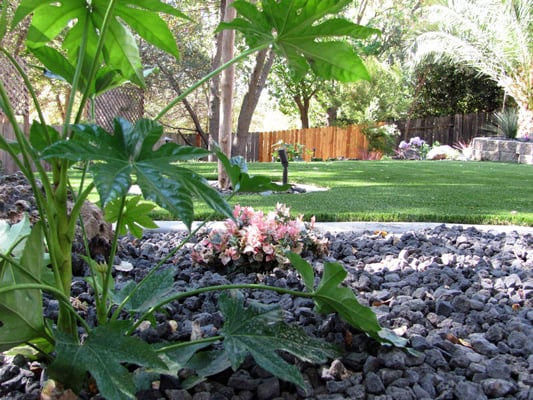 Artificial Grass For Backyard Reviews : Roseville completed backyard remodel with hardscape, artificial grass