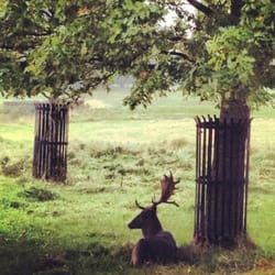 Deer Having A Rest