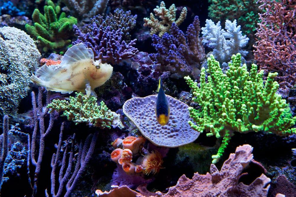 Aquarium supplies near me aquariums for saltwater fish for Live saltwater fish