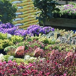 Squire's Garden Centres, Long Ditton, Surrey