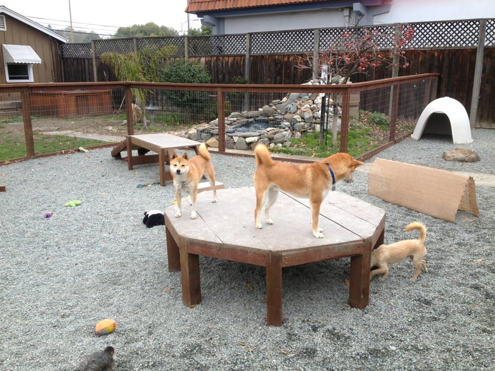 on the play structures in small dog play area yelp