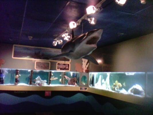 South Florida Science Center And Aquarium 74 Photos