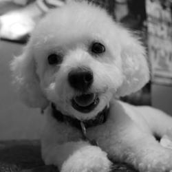 Dog Grooming Brooklyn Mi