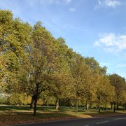 The trees in autumn are full of colour, especially on a sunny day