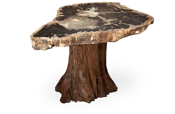 Petrified wood end table on hardwood tree stump top is approx 15