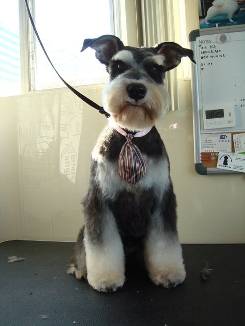 Dog Grooming Reviews Singapore