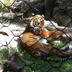 Zoo Elite Boynton Beach