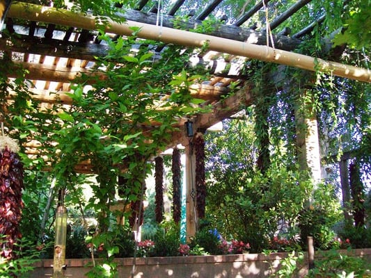 Pergola With Vines : Vine-Covered Pergola