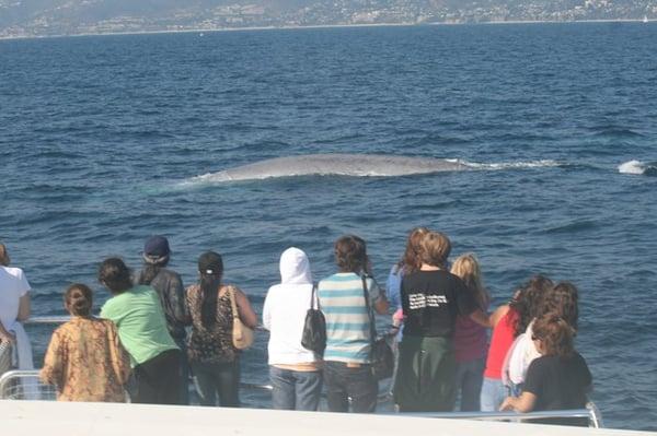 Dana wharf sportfishing and whale watching 203 photos for Dana point fishing charters