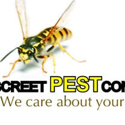 B-Discreet Pest Control, Northampton, UK
