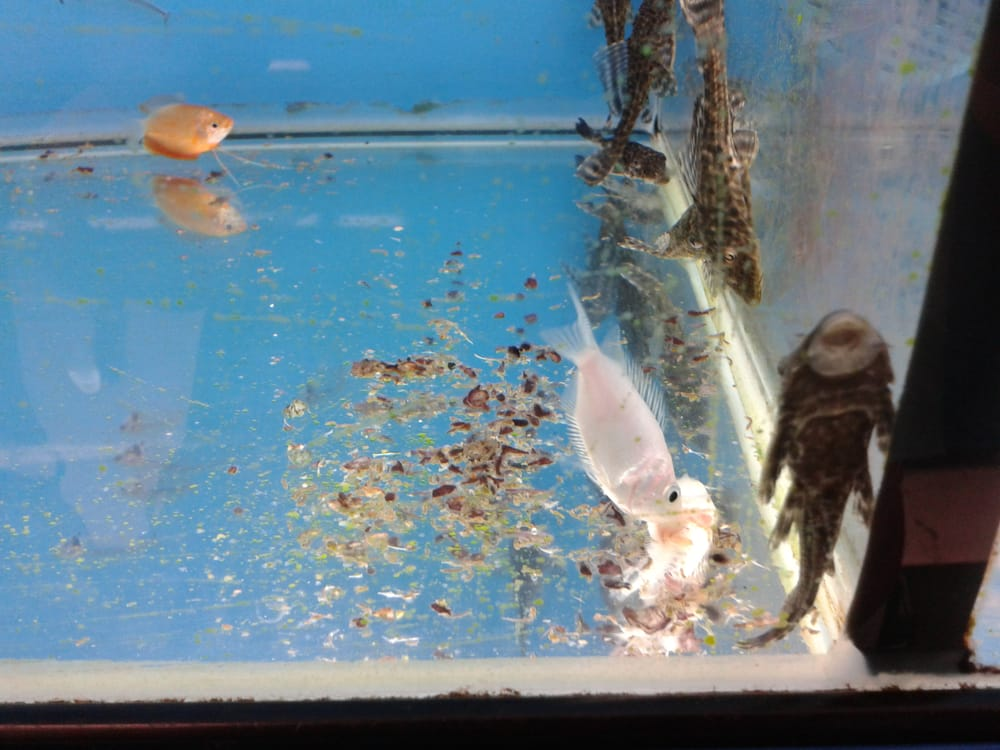 Dead fish in fish tank yelp for Where can i buy worms for fishing near me