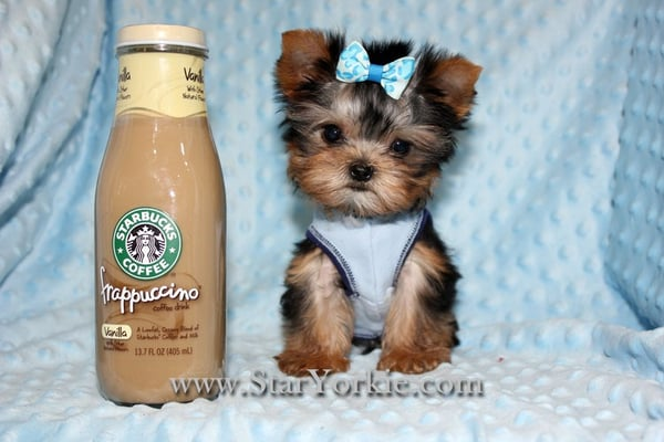 Photos for Puppy Heaven- Teacup & Toy Puppies for Sale ...