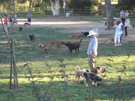 Dog Parks In San Fernando Valley