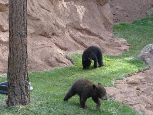 Bear Land
