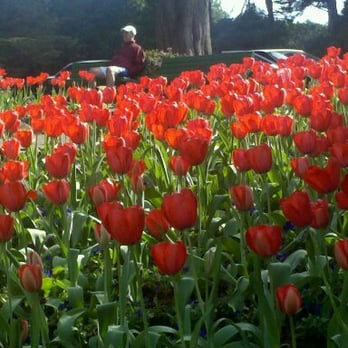Queen Wilhelmina Tulip Garden Landmarks Historical Buildings San Francisco Ca Yelp