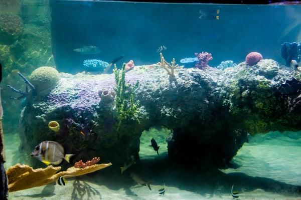 Photos For Austin Aquarium Yelp