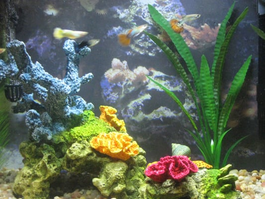 thank you aquatic life forms my son 15 months loves his. Black Bedroom Furniture Sets. Home Design Ideas