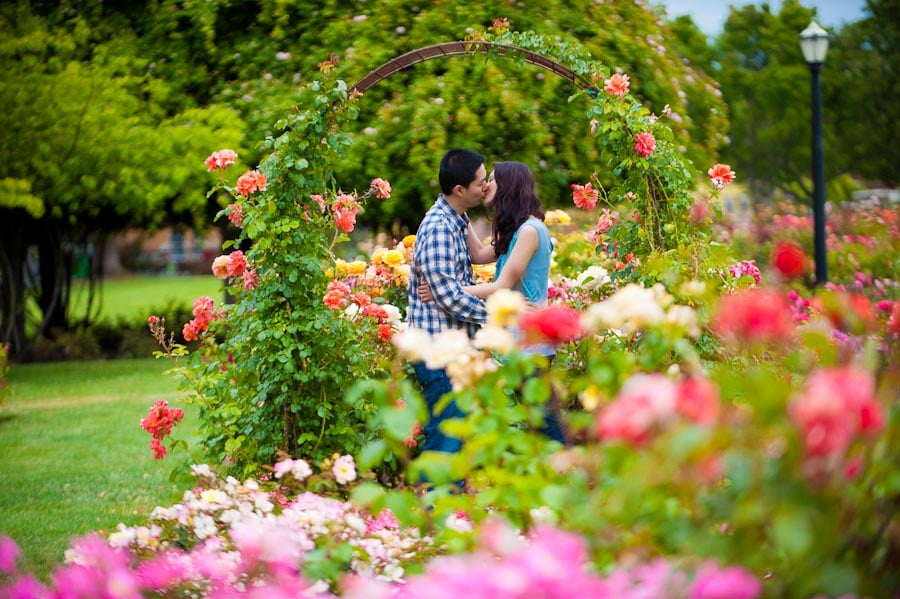 Roses In Garden: Engagement, San Jose State University + San Jose Municipal